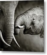 Elephant Affection Metal Print