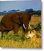 Elephant And The Lions Metal Print
