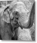 Elephant And Tree Trunk Black And White Metal Print