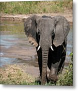 Elephant At The River Metal Print
