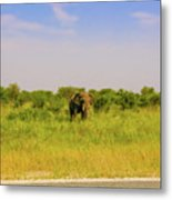 Elephant At The Road Metal Print