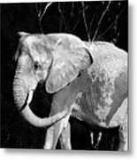 Elephant Metal Print by Camille Lopez