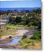 Elephant Crossing In Tarangire Metal Print