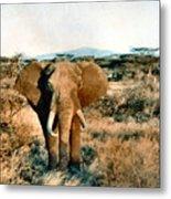 Elephant Eyes Metal Print