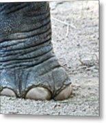 Elephant Foot Metal Print
