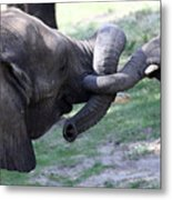 Elephant Greeting IIi Metal Print