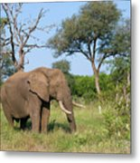 Elephant Heaven Metal Print