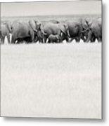 Elephant Herd East Africa Metal Print