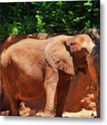 Elephant In Red Clay Metal Print