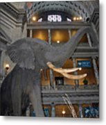 Elephant In The Room Metal Print