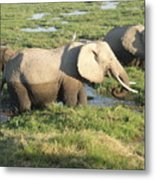 Elephant Mother And Calves Metal Print