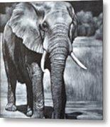 Elephant Night Walker Metal Print