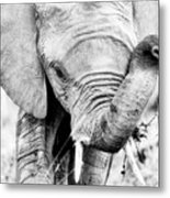 Elephant Portrait In Black And White Metal Print