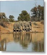 Elephant Refelction Metal Print