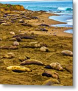 Elephant Seals Near Cambria  Metal Print