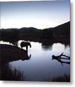 Elephant Silhouette At Sunset Metal Print