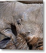 Elephant Smile Metal Print