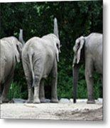 Elephant Trio Metal Print