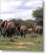 Elephant Walk Tsavo National Park Kenya Metal Print