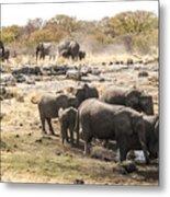 Elephant Watering Hole Metal Print