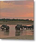 Elephants At Dusk Metal Print