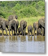 Elephants At The Waterhole   Metal Print