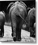 Elephants In Black And White Metal Print