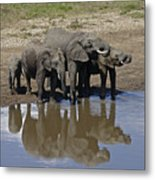 Elephants In The Mirror Metal Print