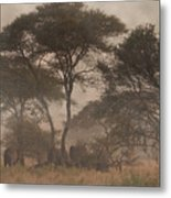 Elephants On The Serengeti Foggy Evening Metal Print