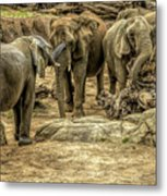 Elephants Social Metal Print