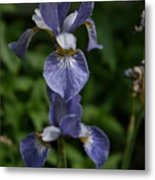 Elevated Iris Metal Print