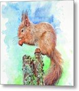 Elevenses - Red Squirrel Metal Print