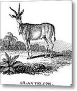 Elk Antelope Metal Print