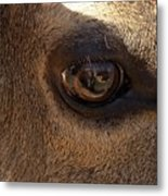 Elk Eye Close Up Metal Print