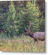 Elk In The Forest Metal Print