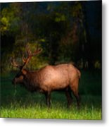Elk In The Smokies. Metal Print by Itai Minovitz