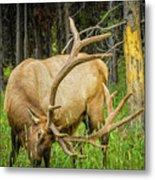 Elk In The Woods Metal Print