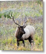 Elk In Wildflowers #1 Metal Print