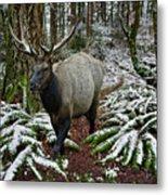 Elk In Winter Metal Print
