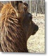 Elk Profile Metal Print