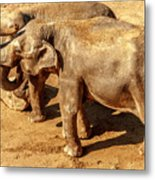 Ellephants Metal Print