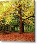 Elora Gorge Campsite In Fall Metal Print