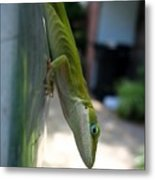 Emaciated Lizard Metal Print