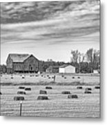 Emergence _ The Hues Of Spring Bw Metal Print