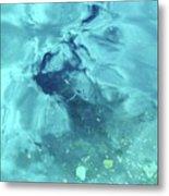 Water Horse Metal Print
