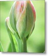 Emerging Ice Cream Tulip Metal Print