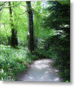 Enchanted Forest At Blarney Castle Ireland Metal Print