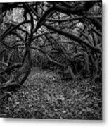 Enchanted Hau Forest Metal Print