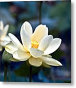 Enchanting Lotus Metal Print