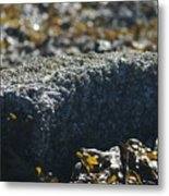 Encrusted Rock Metal Print